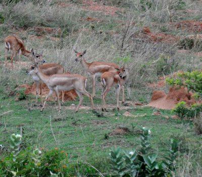 Wildlife at Zion Hills