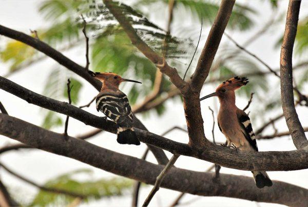 Bird Watching at Zion Hills